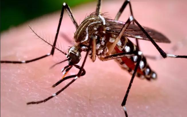 Photo of Muere niña de 5 años por sospecha de dengue; sería la primera del año
