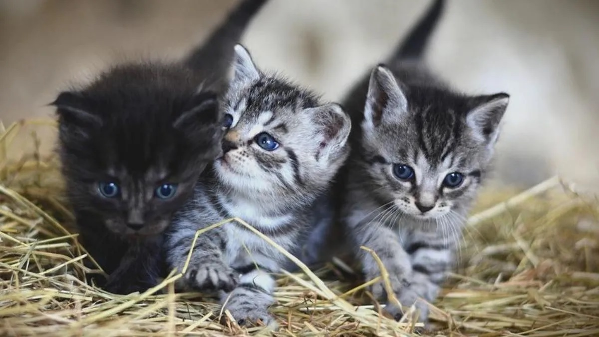 Photo of Dos gatos en Nueva York dan positivo al coronavirus, según las autoridades