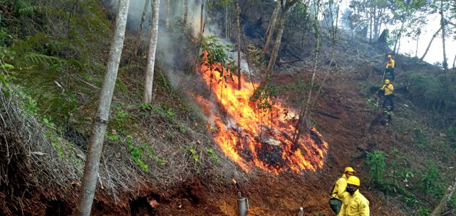Photo of 17 fuegos forestales afectaron Constanza
