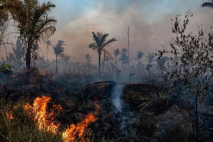 Photo of Aumenta la deforestación en la Amazonía a medida que la pandemia obstaculiza su protección