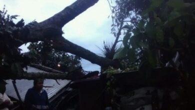 Photo of Niño de cinco años muere al caer árbol en su vivienda