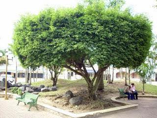 Photo of Desde La Matica