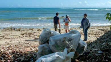 Photo of Limpian playas PP arropadas por basura y plástico