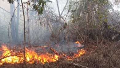 Photo of PUERTO PLATA: Extinguen incendio en los manglares de Estero Hondo