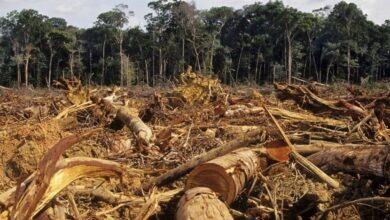 Photo of Denuncian deforestación en Jarabacoa