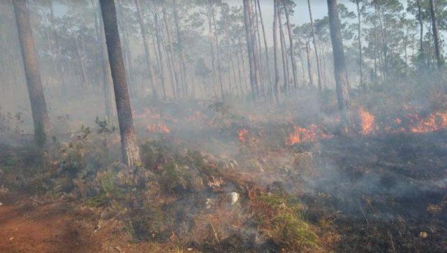 Photo of Fuego afecta loma La Oz en Barahona
